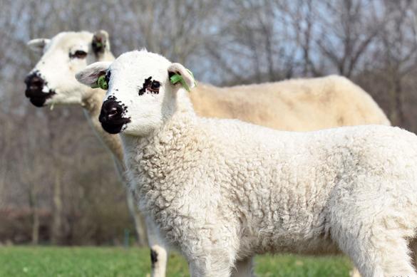 Landgoedboerderij Oosterheerdt - Lammertijd